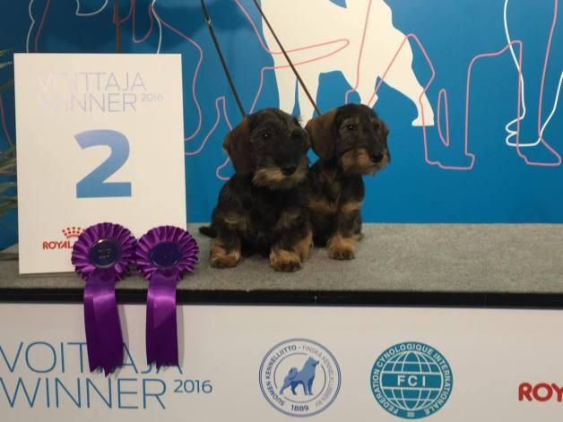 Puppy Winner 2016 Rallytax Alessia ja Alvaro