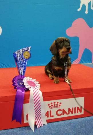 Puppy Winner 2018, Ibiza Z Charzykowskiej Strzechy