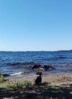 Dracmon Triump rannalla